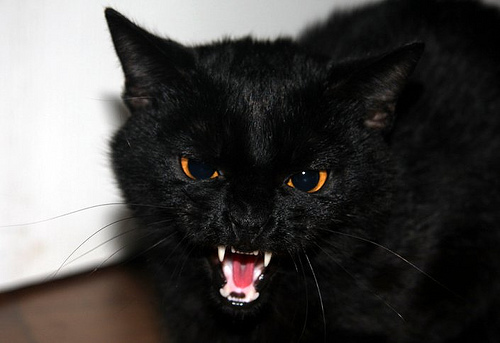Jet Black Cats With Golden Eyes
